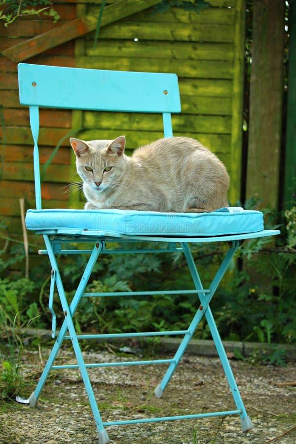 Green, Fauna, Cat, Small To Medium Sized Cats royalty free stock image