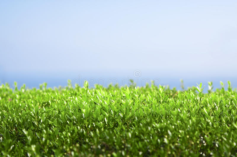 Download Green fence stock photo. Image of agriculture, rural - 20296584