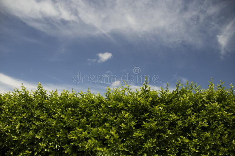 Green fence with a blue sky stock images