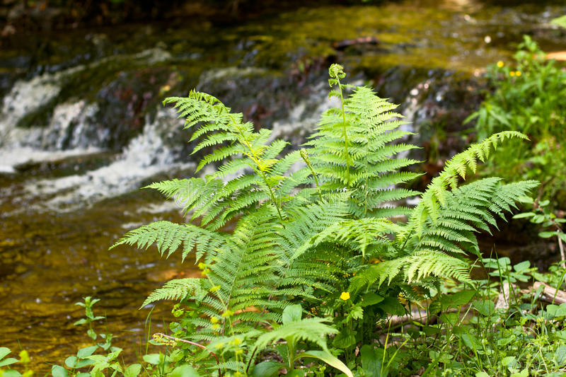 Download Green fern stock photo. Image of texture, fern, plant - 20994190