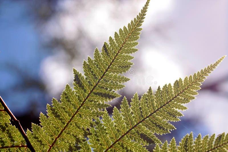 Download Green Fern Stock Image - Image: 21169101