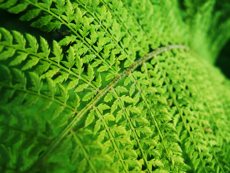 Download Green Fern stock image. Image of outdoor, earth, leaves - 2904697