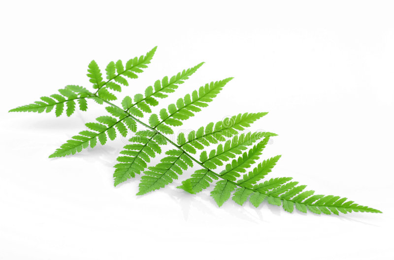 Download Green fern stock image. Image of detail, plant, background - 3181739