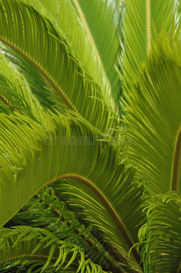 Download Green Fern Background - Vertical Stock Photo - Image: 226552