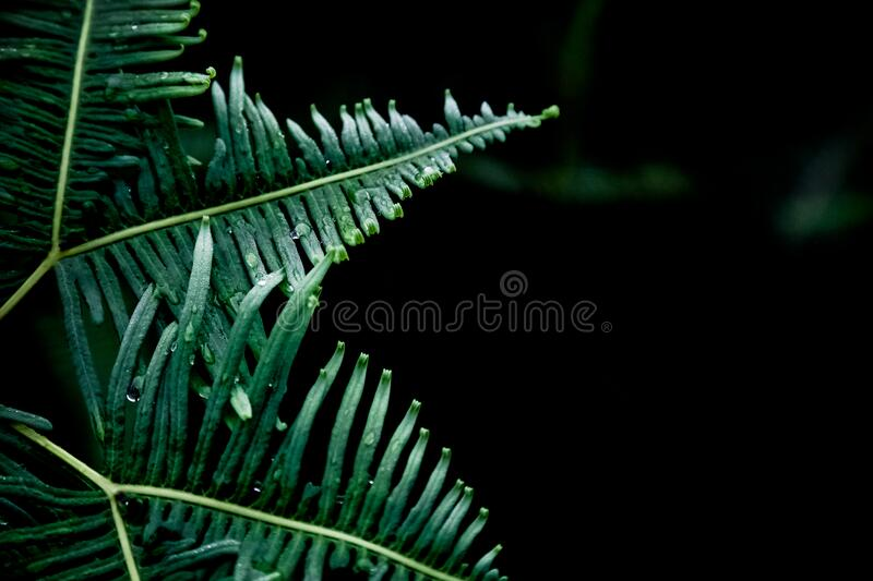 Green fern on black stock images