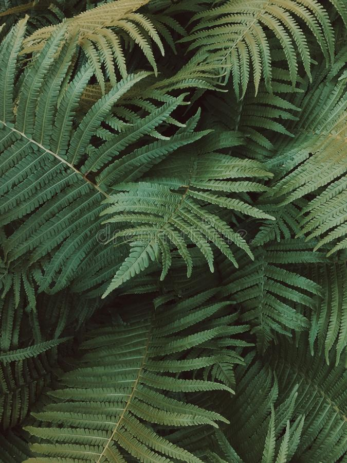 A green fern in a dark forest surrounding. Creating a spiral shape royalty free stock photos