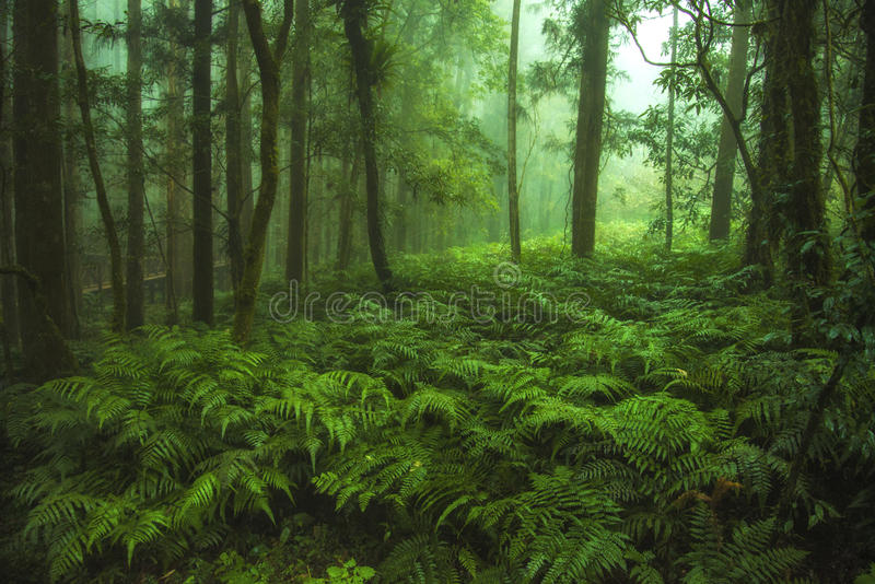 Green fern forest stock images
