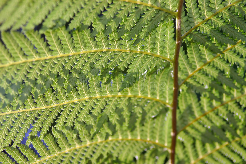 Download Green fern fronds stock image. Image of background, stems - 888531