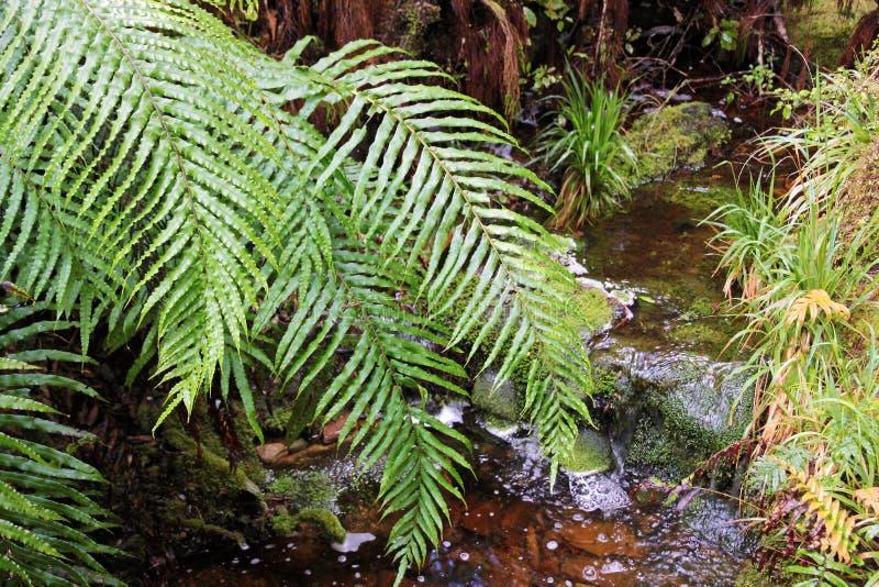 Download Green fern leaves stock image. Image of primitive, park - 22315533