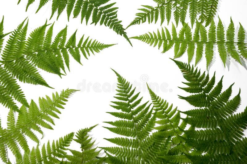 Green fern leaves background stock images