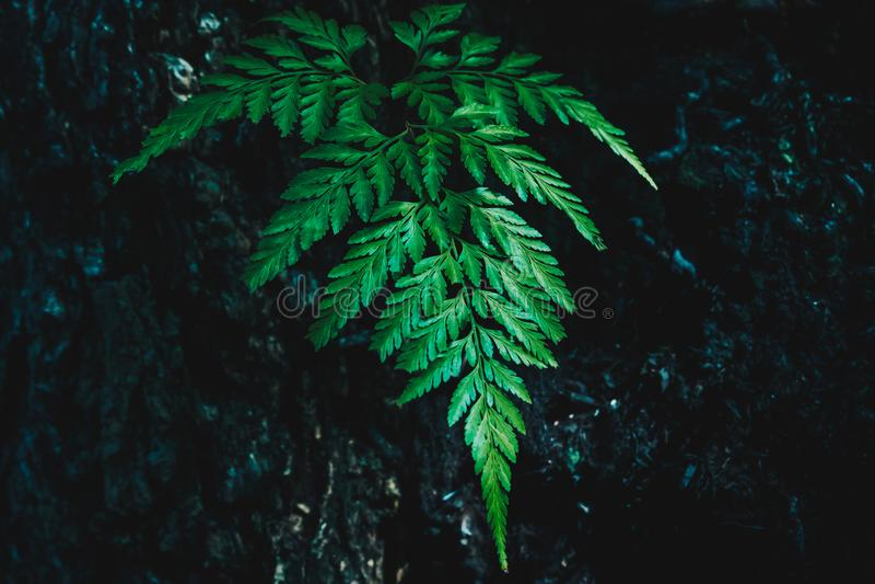 Green fern leaves on dark background stock photos