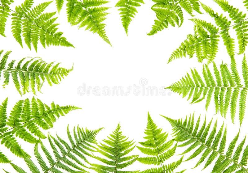 Download Green Fern Leaves Floral Frame Stock Image - Image of fern, floristic: 118607229