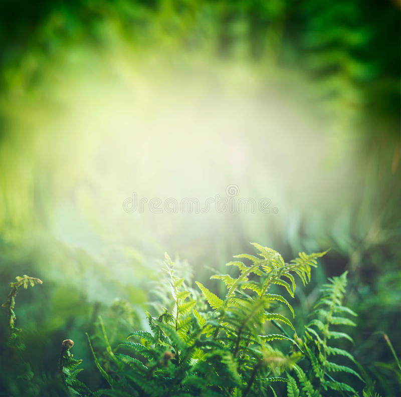 Green Fern plant in tropical jungle or rain forest with sun light, outdoor stock photo
