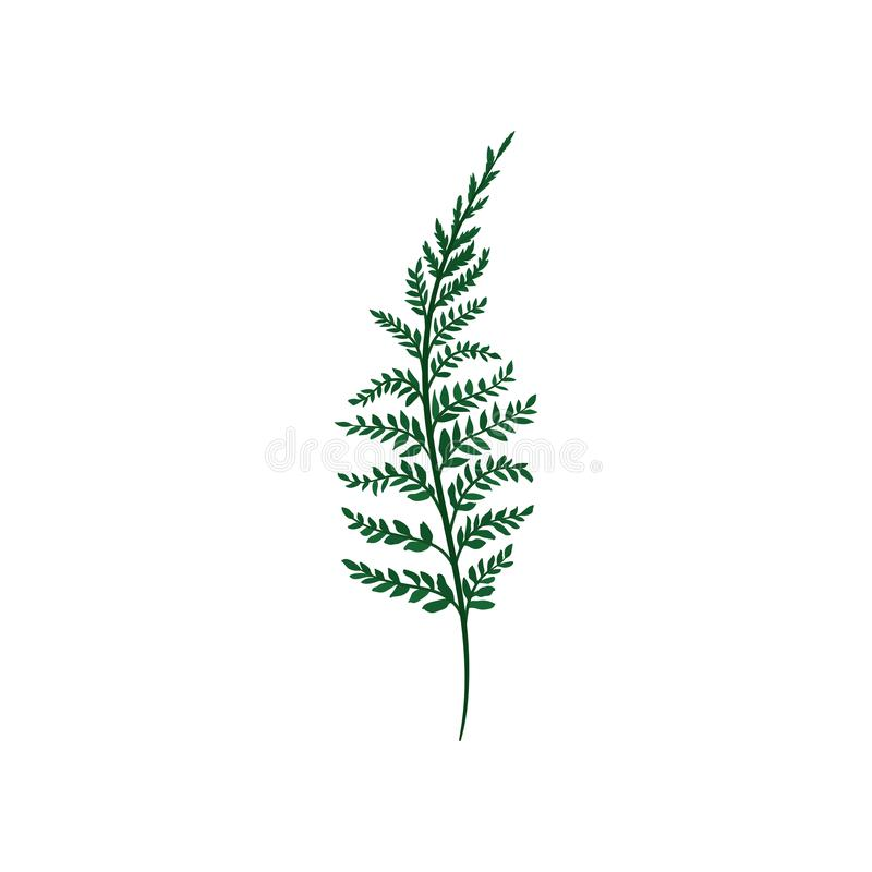 Green fern twig with small leaves. Natural element. Forest plant. Nature and botany theme. Flat vector icon. Green fern twig with small leaves. Natural element vector illustration