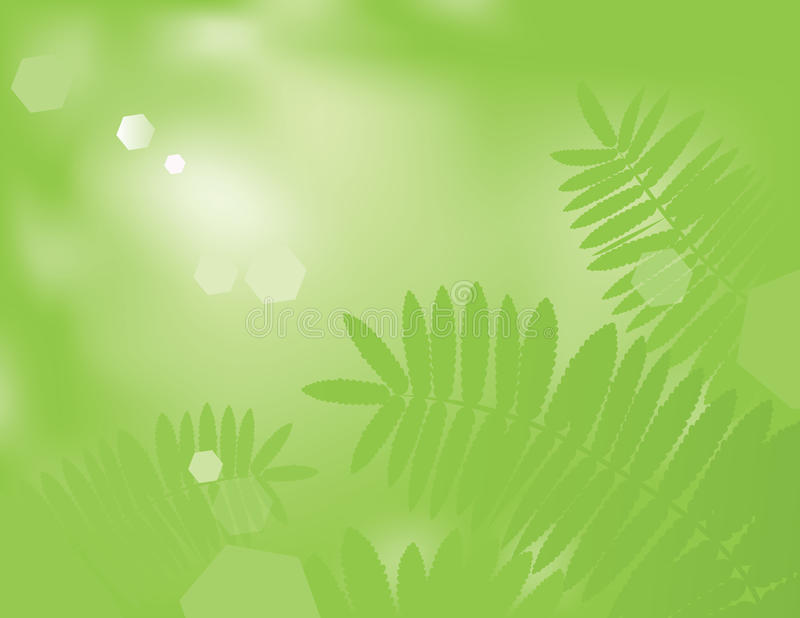 Green Fern. Vector illustration of green fern leafs on defocused background stock illustration