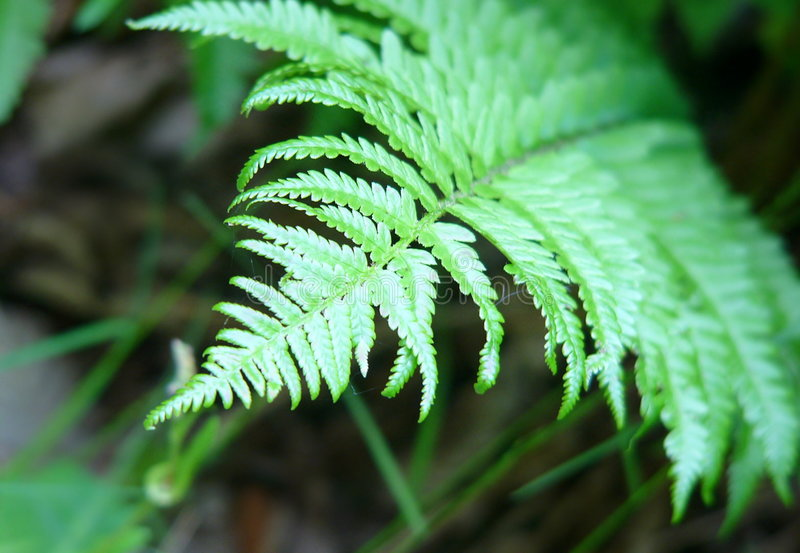 Green ferns. In the forest stock image