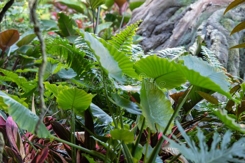 Green ferns. In the forest stock photos