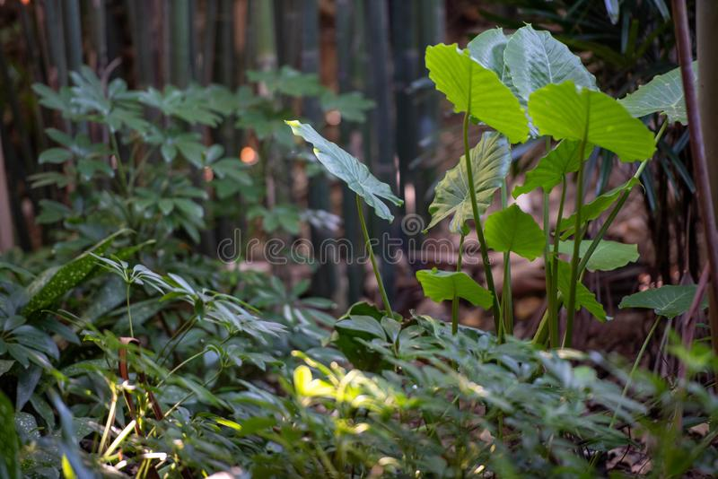 Green ferns. In the forest royalty free stock image