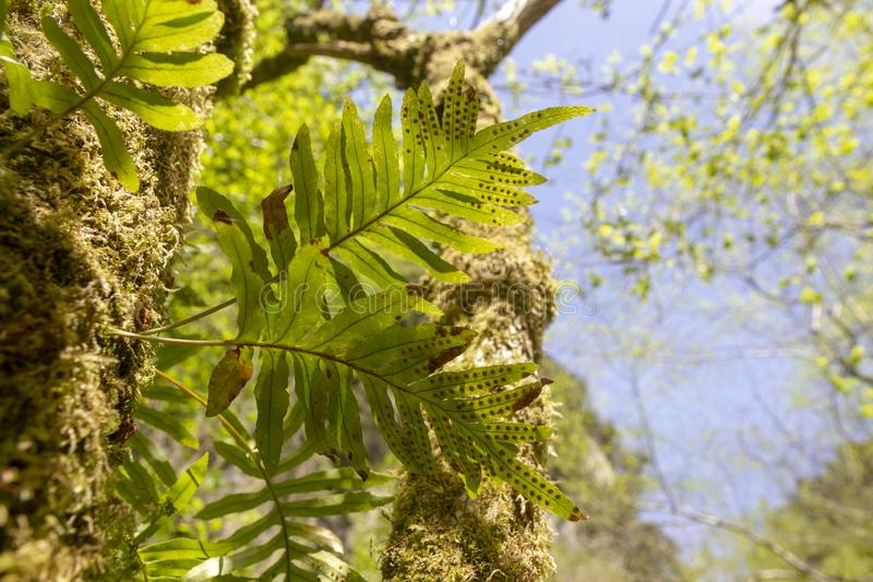 Green ferns. In tropical forest royalty free stock photography