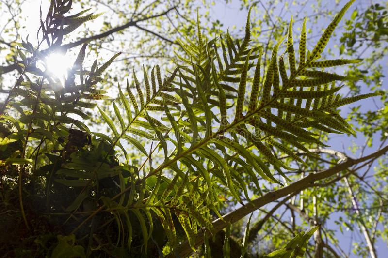Green ferns. In tropical forest stock images
