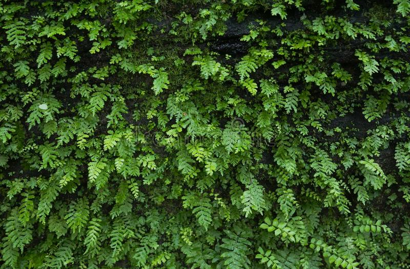 Green ferns growing on rock. Surface stock photos