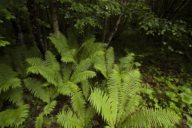 Green ferns in jungle stock photo