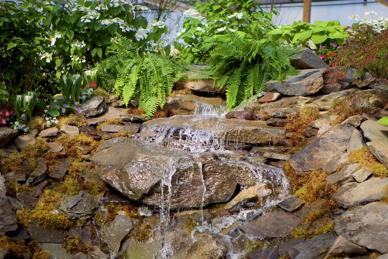 Green Ferns and Trickling Falls. Garden waterfall trickling over mossed rocks.  Ferns, flowers and greenery in the background.  Hint of sunshine.  Horizontal stock photo