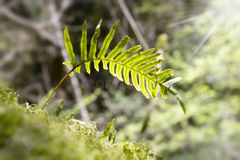 Green ferns. In tropical forest royalty free stock photo
