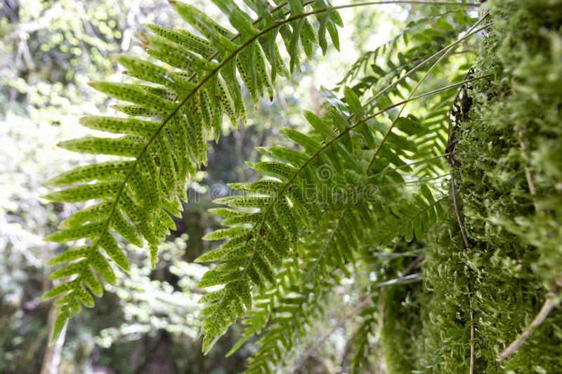 Green ferns. In tropical forest stock photo
