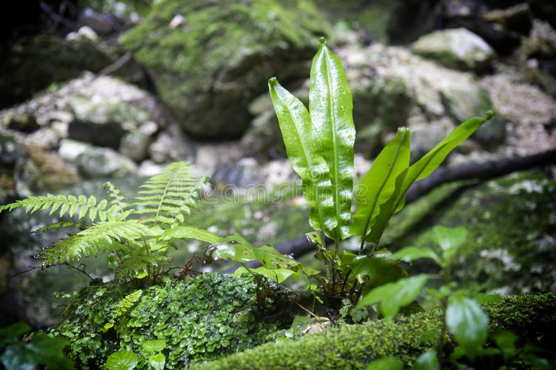 Green ferns. In tropical forest stock photos