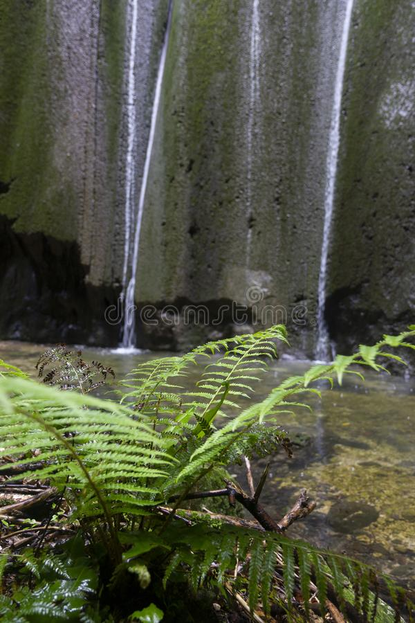 Green ferns. In tropical forest and waterfall stock photos