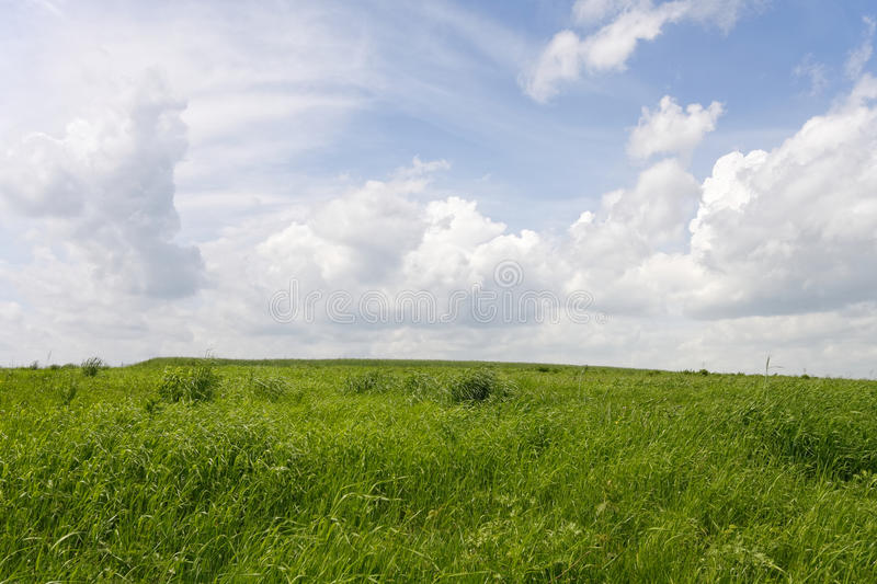 Green Fiel Royalty Free Stock Photo