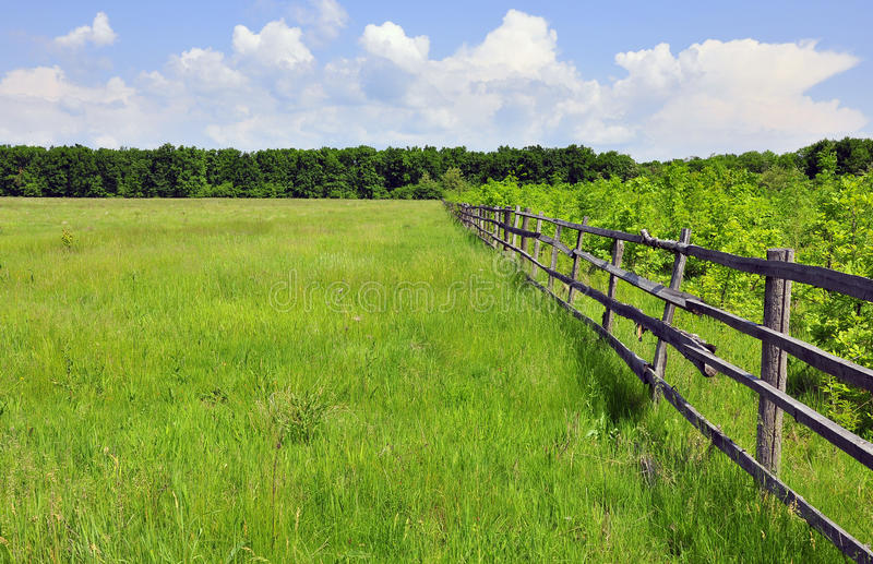 Green field. Near the forest royalty free stock photo