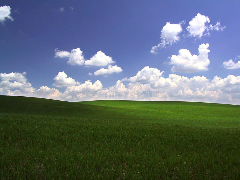 Green field. Image of a field in Central Minnesota