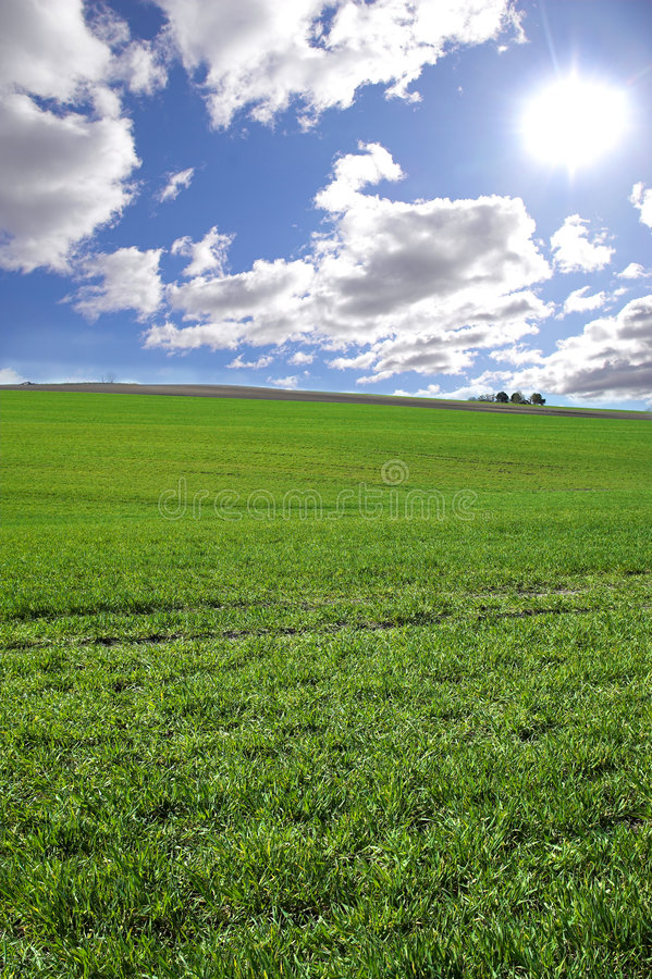 Green field. Photo of green field with blue cloudy sky in the background (Denmark royalty free stock image