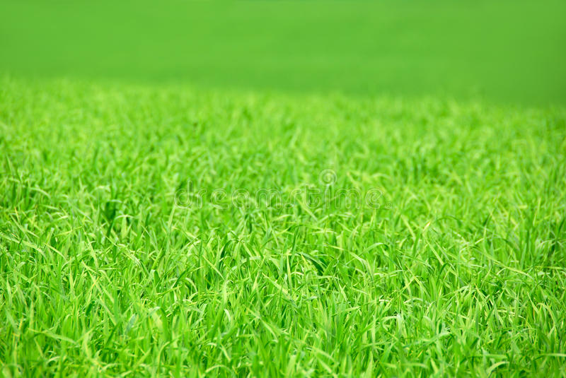Green field royalty free stock image