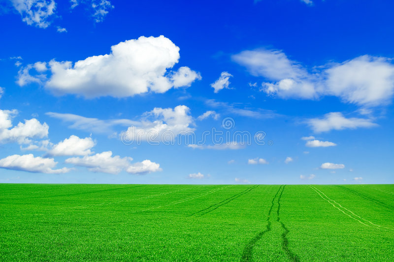 The green field. royalty free stock images