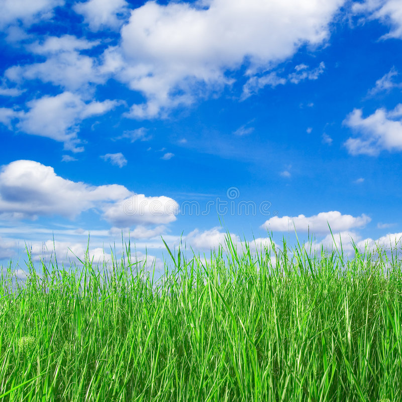 Download Green field stock image. Image of heaven, meadow, agriculture - 3605697