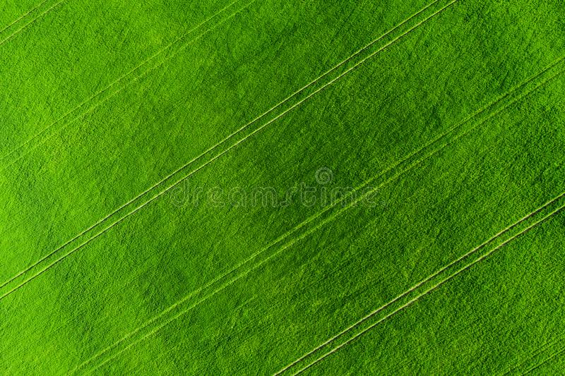 Green field background aerial view. Agriculture Meadow from above. Summer agricultural fields stock image