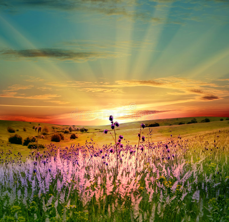 Green field and beautiful sunset royalty free stock photos