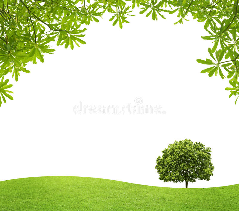 Green field with a big tree and green Leaves