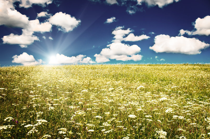 Download Green Field With Blooming Flowers And Blue Sky Stock Image - Image: 7914853