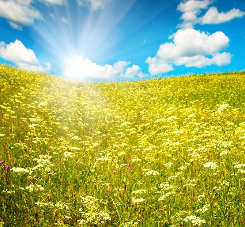 Download Green Field With Blooming Flowers And Blue Sky Stock Image - Image: 8021415