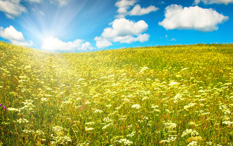 Green field with blooming flowers and blue sky stock photo