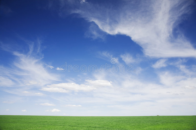 Green field, blue skies, white clouds in spring stock photos