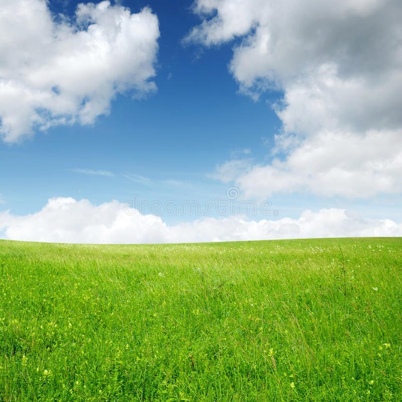 Download Green field and blue sky stock photo. Image of cloudscape - 14852040