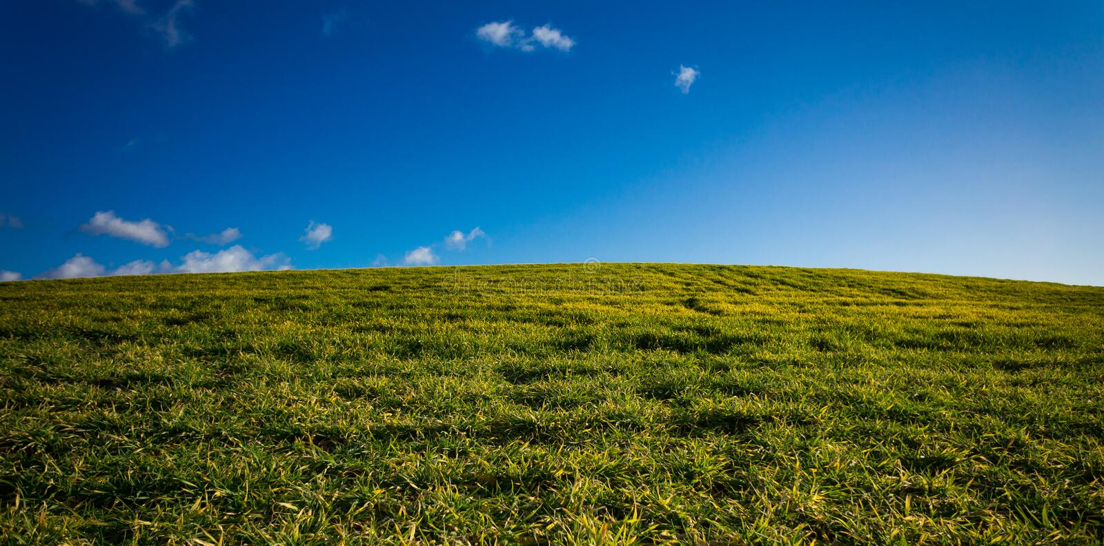 Download Green field with blue sky stock image. Image of agriculture - 22440619