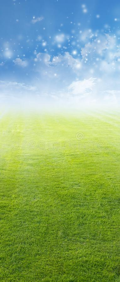 Download Green field, blue sky stock photo. Image of flora, meadow - 22482244