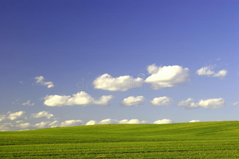 Green Field And Blue Sky Free Stock Image