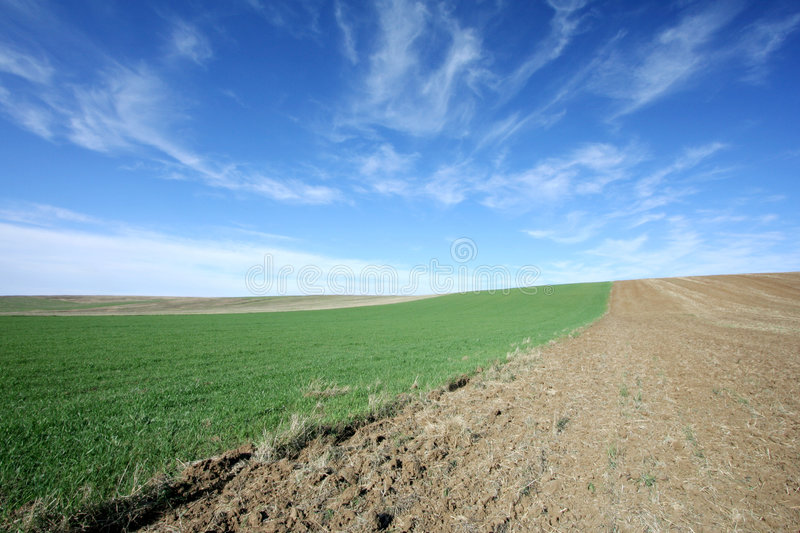 Download Green field and blue sky stock photo. Image of cloudscape - 2310904